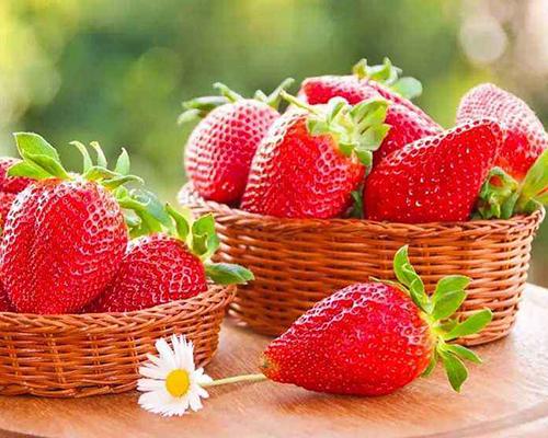 有机草莓基地