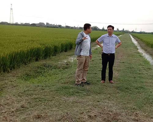 有机米种植基地