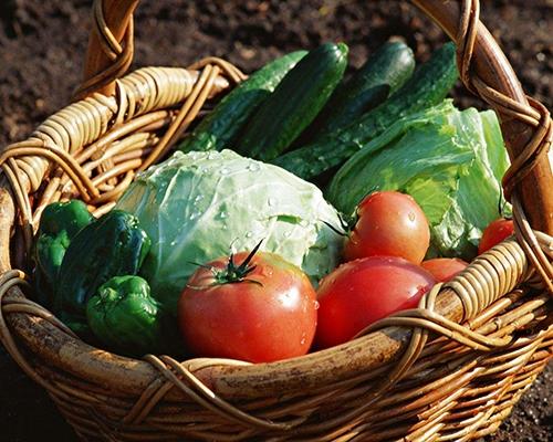 绿色蔬菜供应