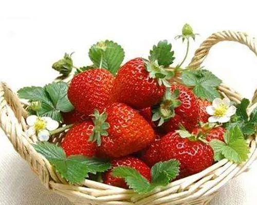 有机种植草莓