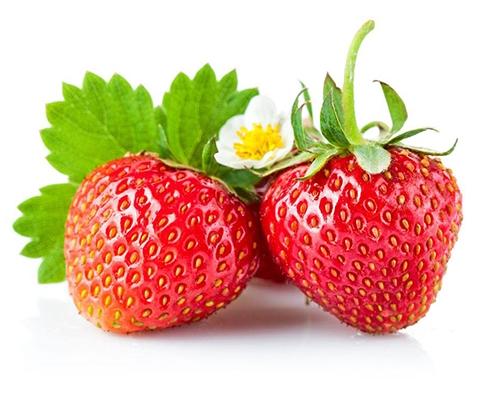 有机草莓种植
