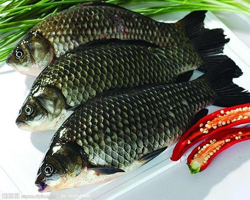 生态鱼养殖