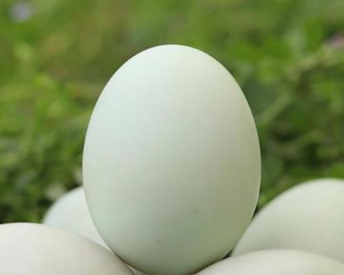 生态鸭蛋价格