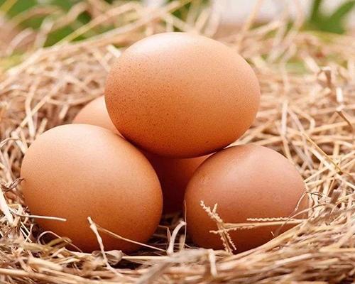 生态鸡蛋价格